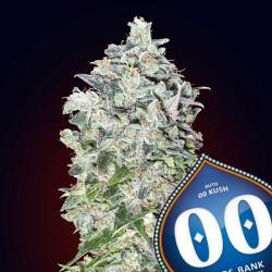 Auto 00 Kush - Autoflorecientes - 00 Seeds