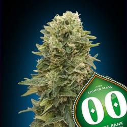 Auto Afghan Mass - Autoflorecientes - 00 Seeds