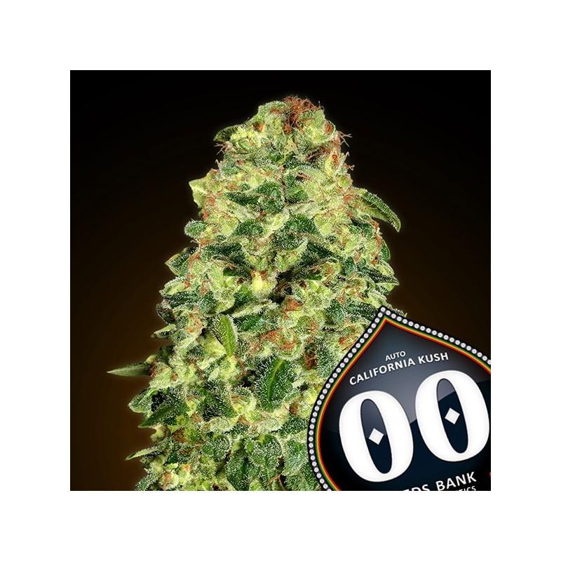 Auto California Kush - Autoflorecientes - 00 Seeds