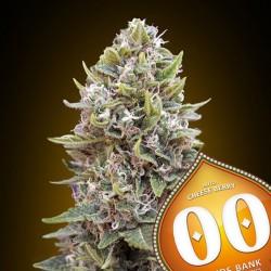 Auto Cheese Berry - Autoflorecientes - 00 Seeds