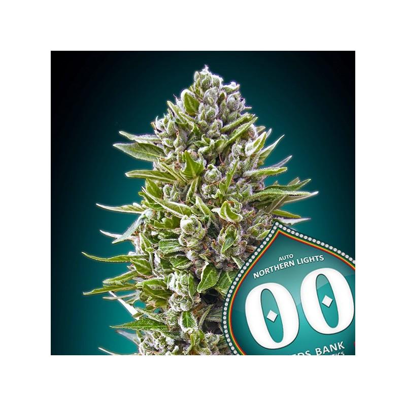 Auto Northern Lights - Autoflorecientes - 00 Seeds