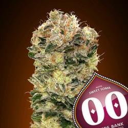 Auto Sweet Soma - Autoflorecientes - 00 Seeds