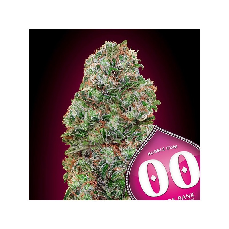 Bubble Gum - Feminizadas - 00 Seeds