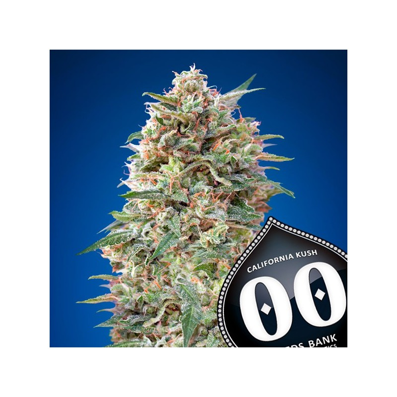 California Kush - Feminizadas - 00 Seeds