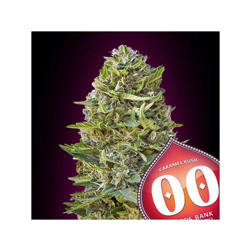 Caramel Kush - Feminizadas - 00 Seeds