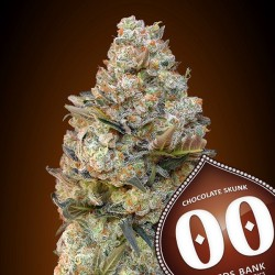 Chocolate Skunk - Feminizadas - 00 Seeds