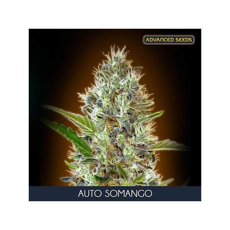 Auto Somango - Autoflorecientes - Advanced Seeds