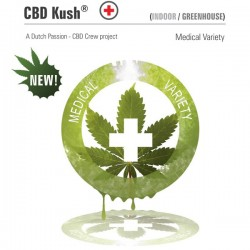 CBD Kush - Feminizadas - Dutch Passion