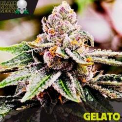 Gelato - Feminizadas - Black Skull Seeds