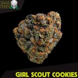 Girl Scout Cookies - Feminizadas - Black Skull Seeds