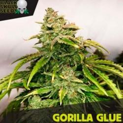 Gorilla Glue - Feminizadas - Black Skull Seeds