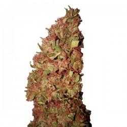Strawberry CBD+ - Feminizadas - CBD Buds