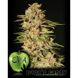 Papa's Candy - Feminizadas - Eva Seeds