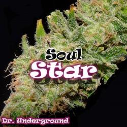 Soul Star - Feminizadas - Dr Underground