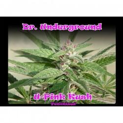 U-Pink Kush - Feminizadas - Dr Underground