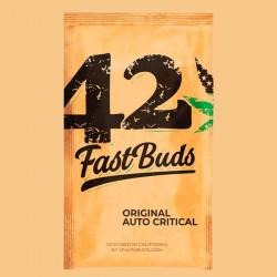 Auto Critical - Autoflorecientes - FastBuds Seeds