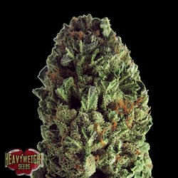 Budzilla - Feminizadas - Heavyweight Seeds
