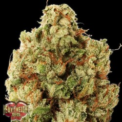 Green Ninja - Feminizadas - Heavyweight Seeds