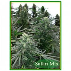 Safari Mix - Regulares - Mandala Seeds