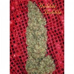 Hubble Bubble - Feminizadas - Mandala Seeds