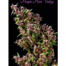 Purple Paro Valley - Feminizadas - Mandala Seeds