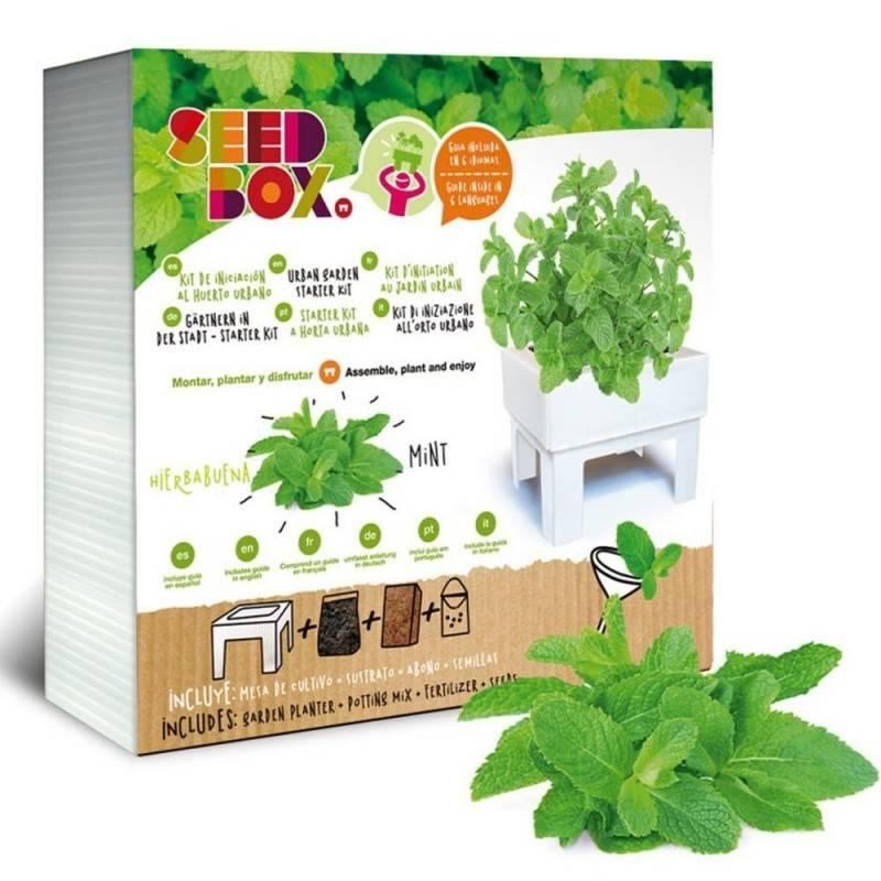 SeedBox Mini huerto hierbabuena