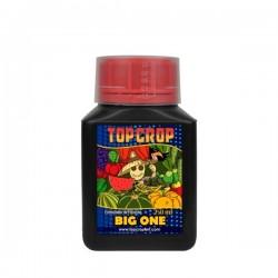 Big One - Top Crop