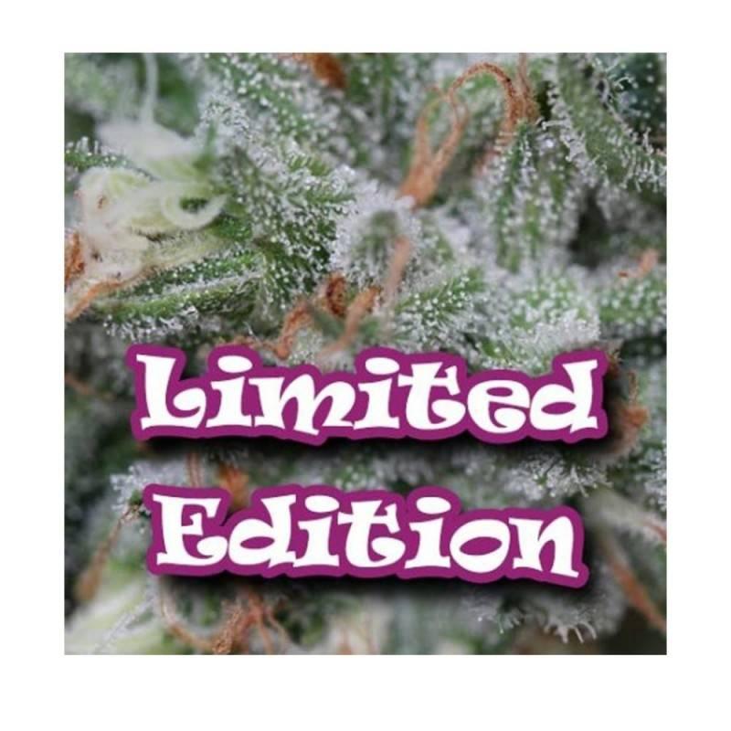 Sweet Diesel Ed.limitada