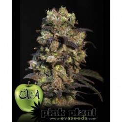 Pink Plant