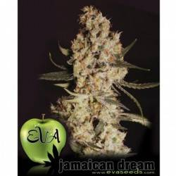 Jamaican dream