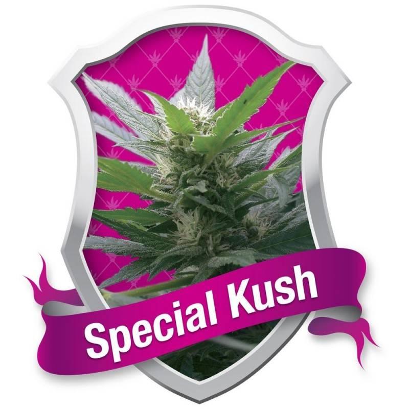 Special Kush nº1