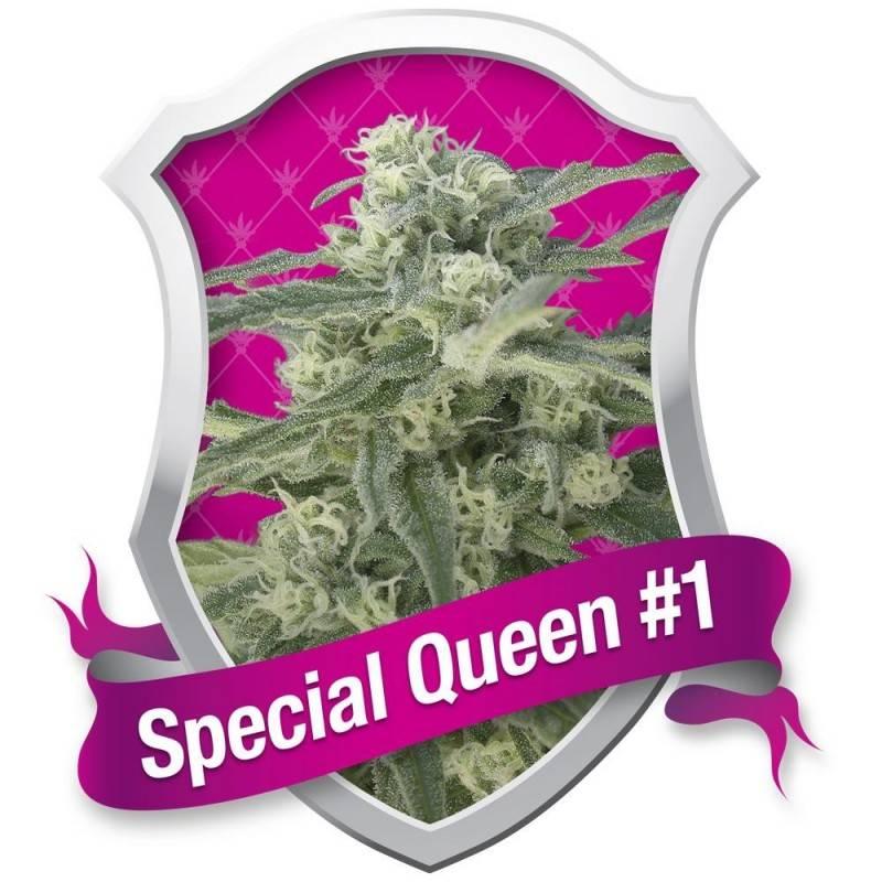 Special Queen nº1