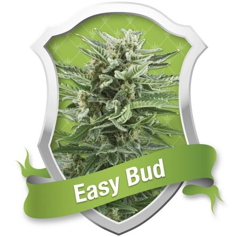 Easy Bud