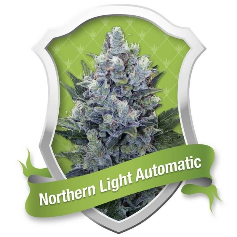 Northern Light Automatic